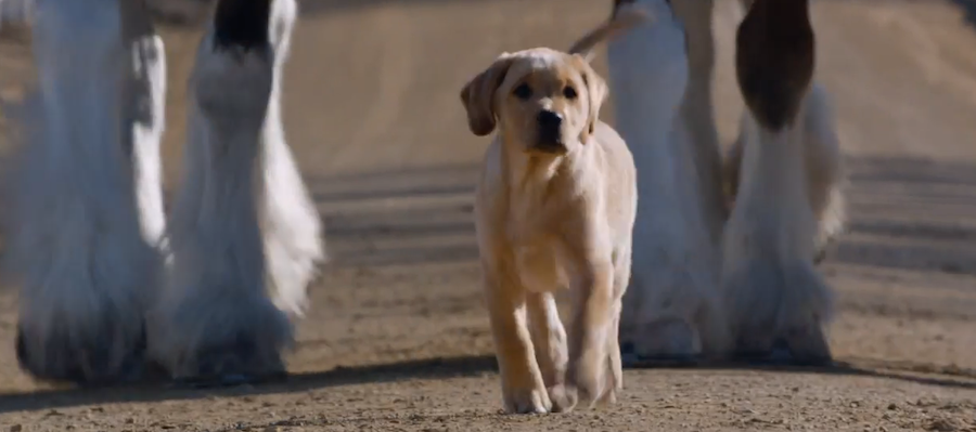 Best bud/ Best puppy ad?